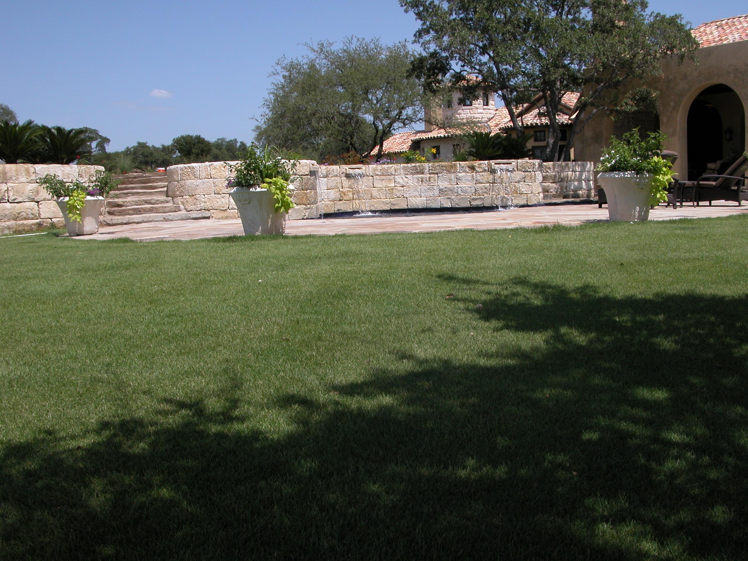 Jamur Zoysia Lawn And Landscape Grass