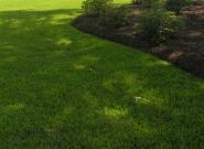 jamur-lawn-pine-bed