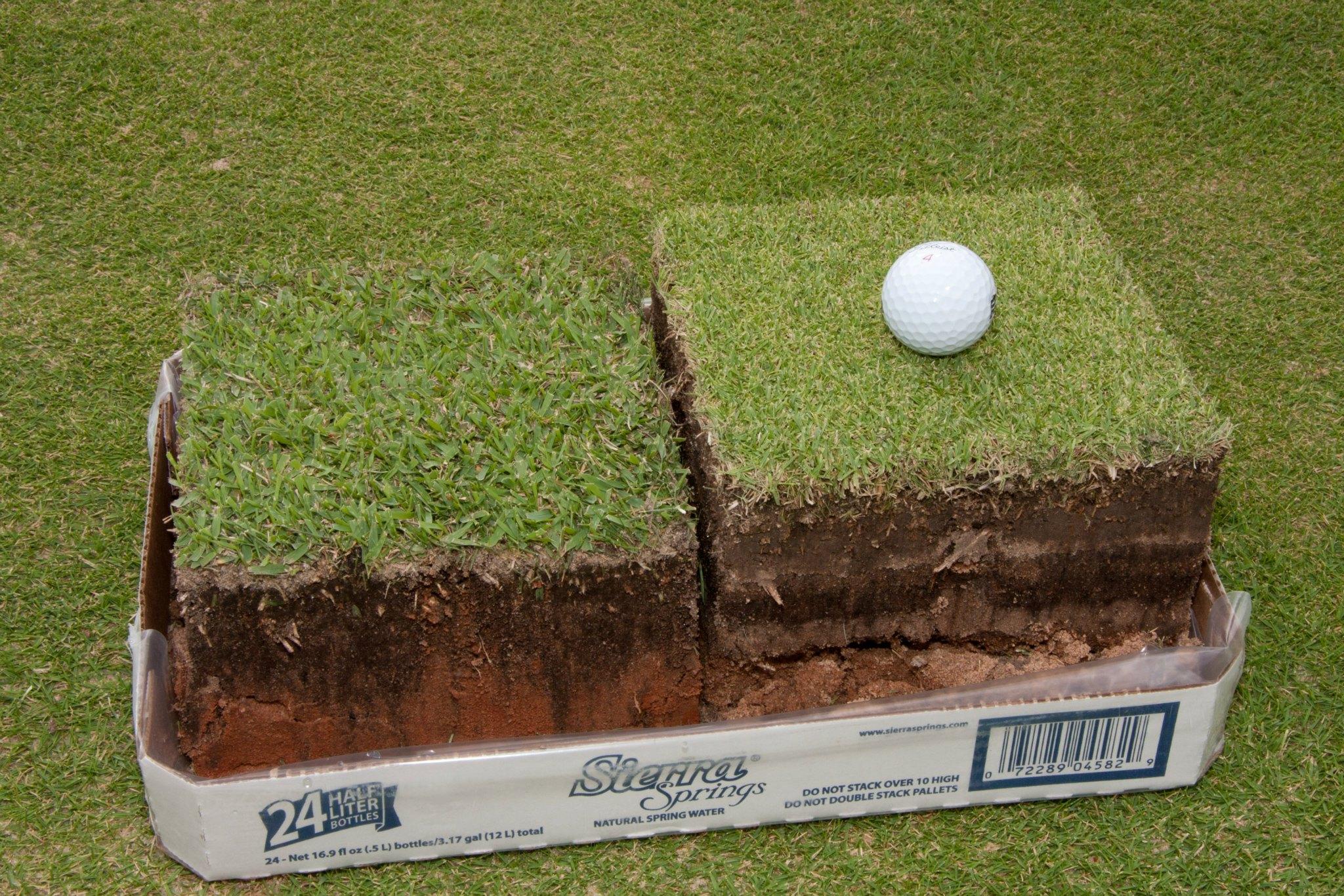 Trinity Zoysia Grass For Golf Courses Bladerunner Farms