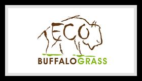 Eco Buffalograss