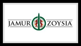 Jamur Zoysia