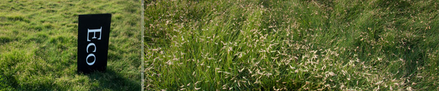 Bladerunner Farms Eco Buffalograss