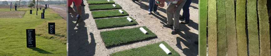 Bladerunner Farms Grass Zoysia Varieties
