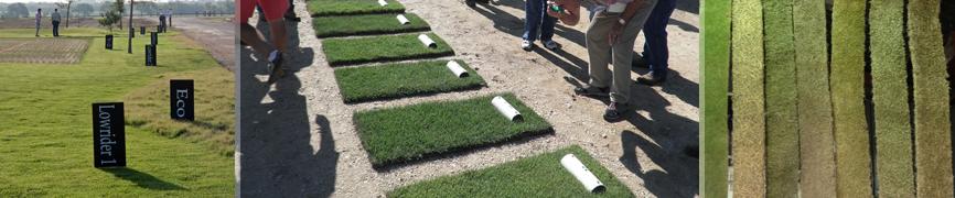 Bladerunner Farms Grass Zoysia Varieties