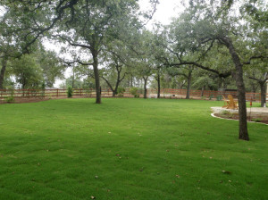 Zoysiagrass growing in the shade